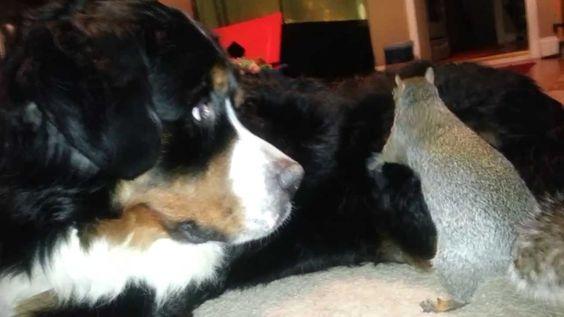Wie ein Eichhörnchen eine Eichel in Hund versteckt - http://www.dravenstales.ch/wie-ein-eichhoernchen-eine-eichel-in-hund-versteckt/