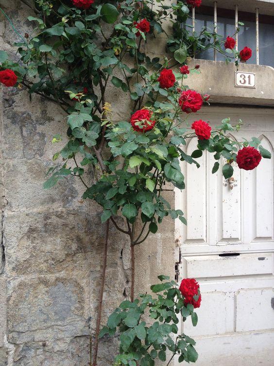 Roses in France