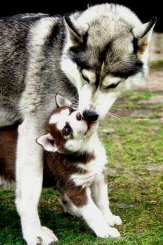 the power of love be     the power of love between mother and her children is infinite...