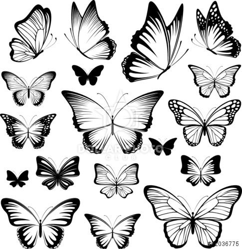 https://www.dollarphotoclub.com/stock-photo/butterfies tattoo silhouettes/52036775 Dollar Photo Club millions of stock images for $1 each