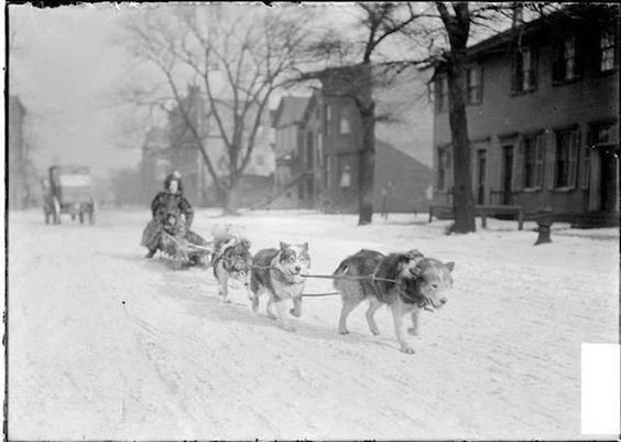 Un cane da slitta tira una madre e figlio in una strada coperta di neve…