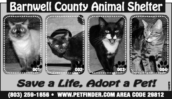 Barnwell County Animal Shelter ad for October 16, 2013 | Barnwell, SC | Pet adoption | The People-Sentinel