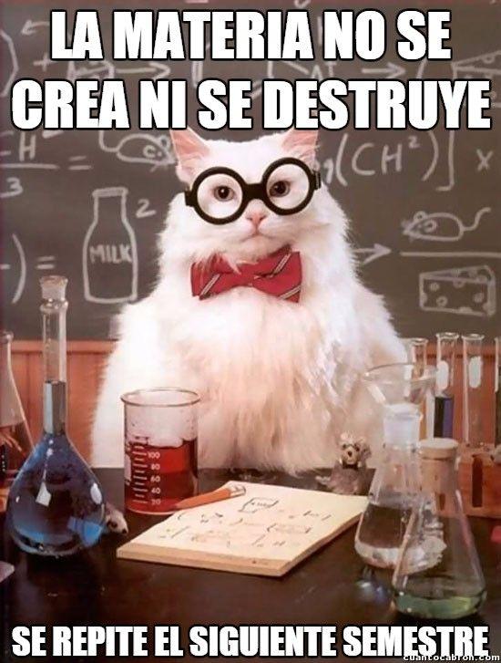 La Verdad Sobre La Materia Funny Cat Memes Funny Animal Memes Crazy Funny Memes