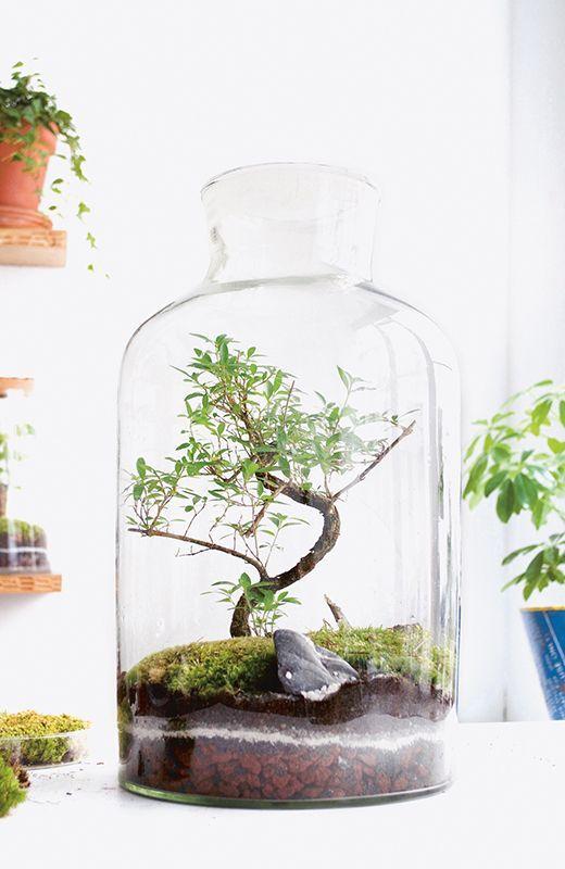 Garten Im Glas Garten Glas Miniature Garden Glass Garden Glass
