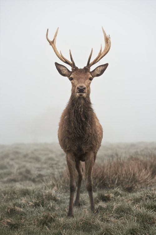 Majestic stag...The Apple Orchard Inspiration