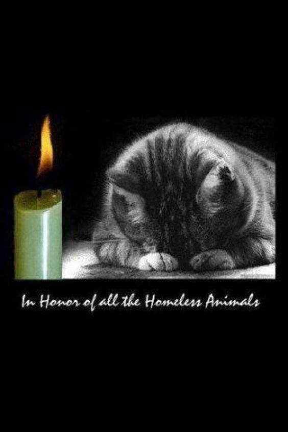In honor of all homeless animals