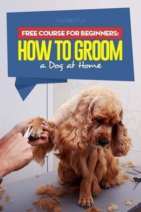 How To Groom A Dog The Largest Free Course For Beginners All In One Dog Grooming For Beginners Home Dog Grooming Styles Dog Grooming Diy Puppy Grooming