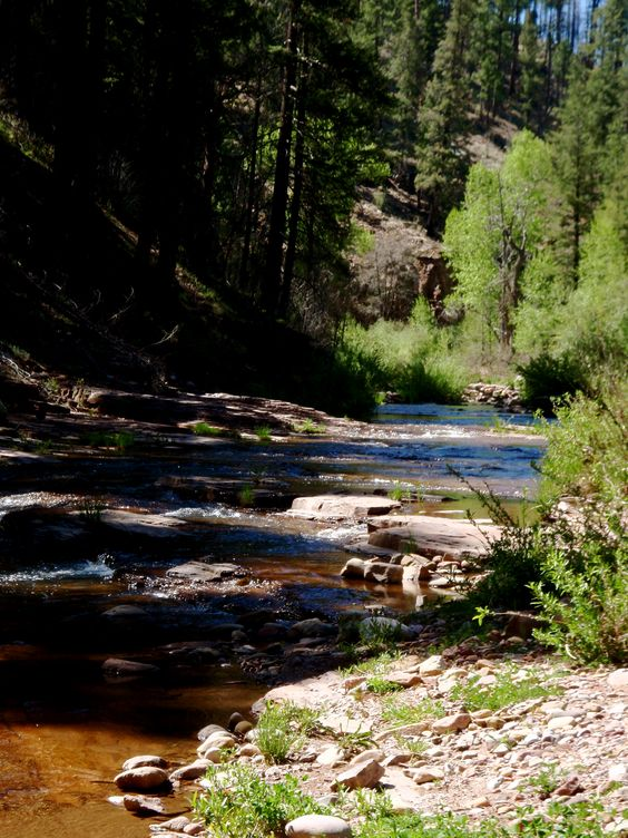 Fly fishing arizona s creeks all things fly fishing for Camping and fishing in arizona