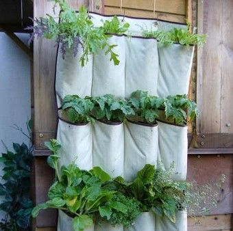 For those with less gardening space, go vertical with a shoe hanger!