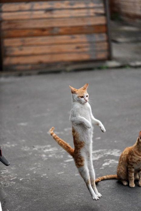 吹き飛ぶ変なポーズの猫