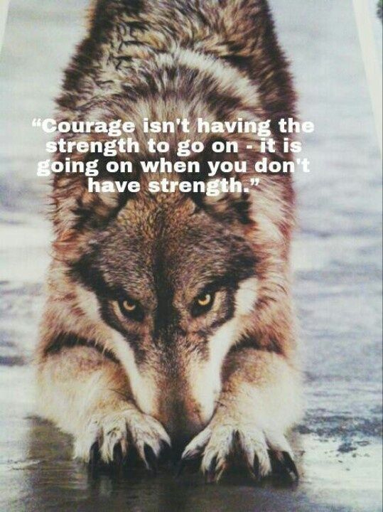 Inspirational Strength Wolf Quotes : inspirational, strength, quotes, 🐺🐺#SaveGrayWolf, #click, #follow, Awesome, Wolves, Designs, Quotes, Express, Pups,Runni…, Warrior, Quotes,