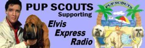 Elvis is in the DogHouse at Pup Scouts Shop