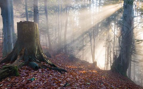 Photographing trees and forests sounds simple, but making a good image of a forest can be surprisingly challenging. Forest Forest Landscape Photography