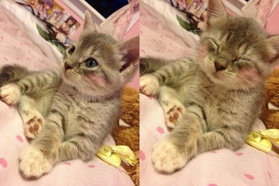Cutie Kittie!!