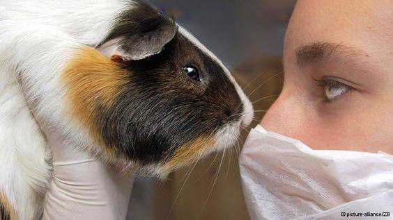 Tierversuche: Ab sofort dürfen keine an Tieren getesteten Kosmetika mehr in die EU importiert werden! Yay!