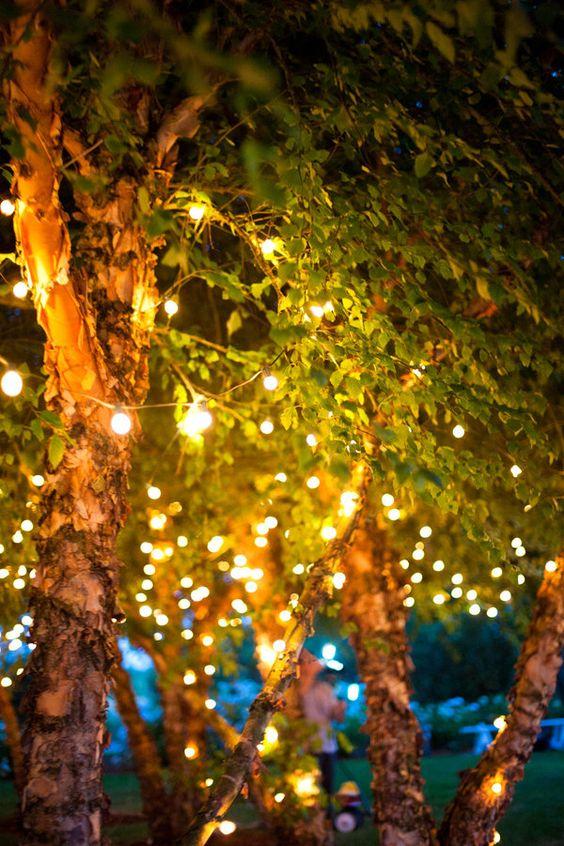 Twinkle lights in trees.