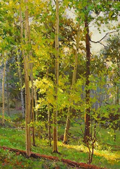 Summer Aspens by Mark Haworth Oil ~ 24 x 18