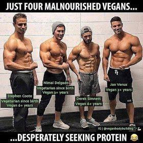 vegan diet bodybuilding meme