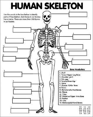 Worksheet Bones Of The Body Worksheet in the fall bone and ojays on pinterest bones worksheet michellescharmworld