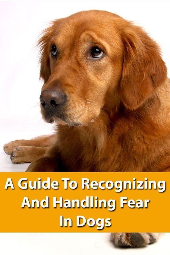 Pin On Dog Training Hacks