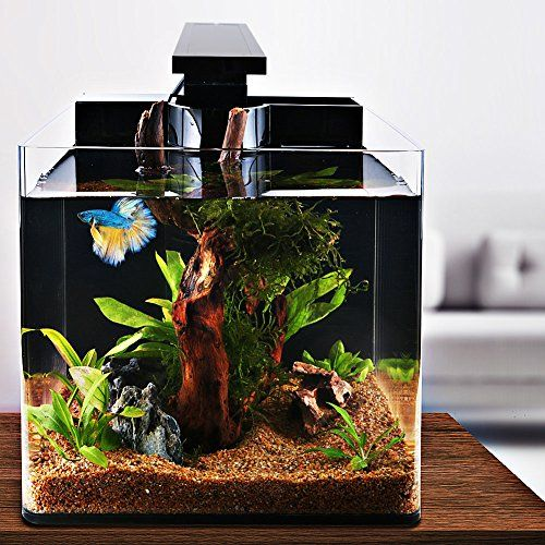 Iswees Betta Fish Tank Complete Aquarium Kit All Acrylic 4 Gallon With Betta Fish Accessories Led Lighting Air Pump Sponge Filter And Heater Decorative F Fish Tank Betta Fish Tank Aquarium