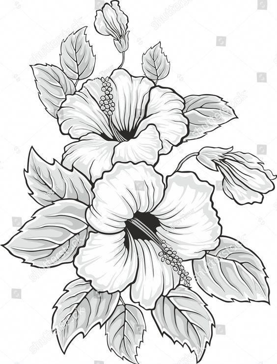 Hibiscus Flower And Leaves Paste For Hair Hibiscus Flower Drawing Flower Sketches Drawings