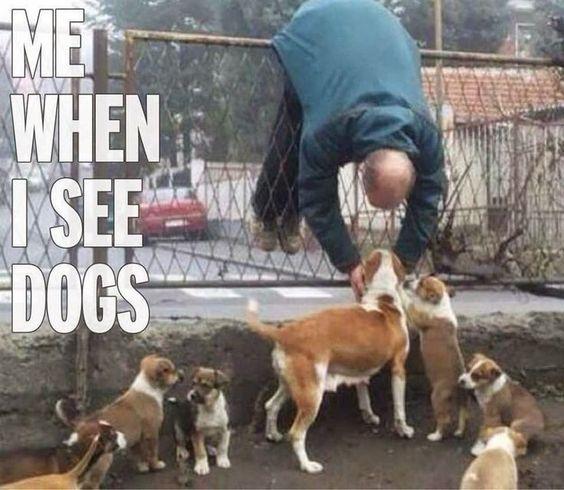 Image result for i'm a dog lover