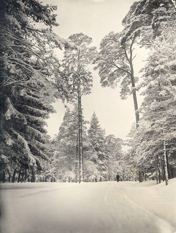 Winter in Uggleviken Forest, Stockholm, Sweden - 1880