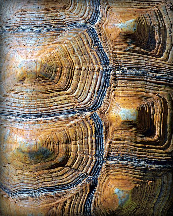 turtle shell pattern - Google Search | art inspiration ...