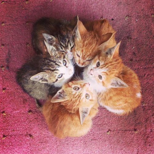 世界に一つだけの?子ネコの花 caterville: We Heart It. | Namidame links