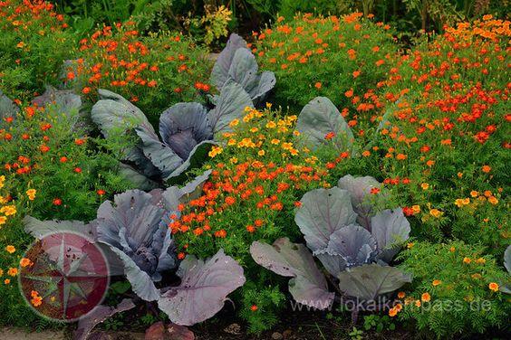 Rot-Orange Gemüse Blumen Mischung
