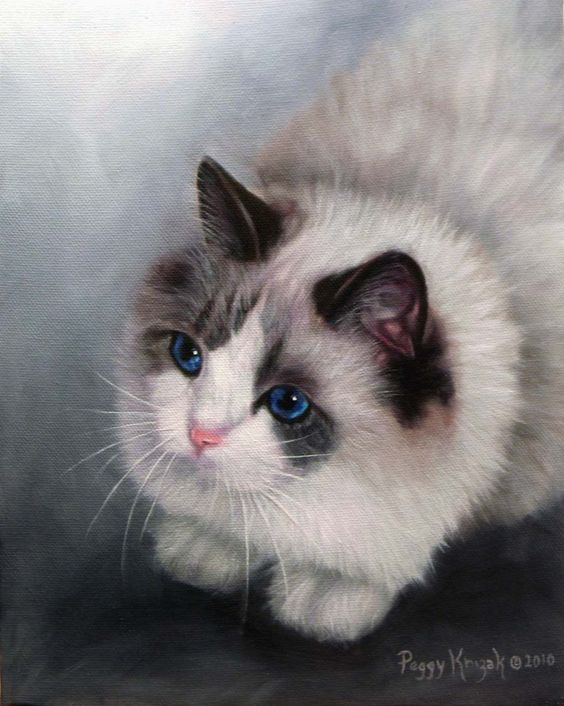 This is a Ragdoll feline. Did this portrait in oil, and its a 8 x 10 canvas. The eyes were exquisite an amazingly blue. www.peggykrizak.com