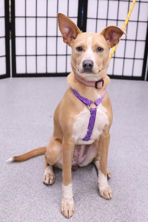 Thanks For Sharing And Helping This Dog Find A Home Italian