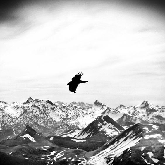 """Corba sobrevolant els #pirineus #cornellanegra #crow #bird #landscape #mountain"""
