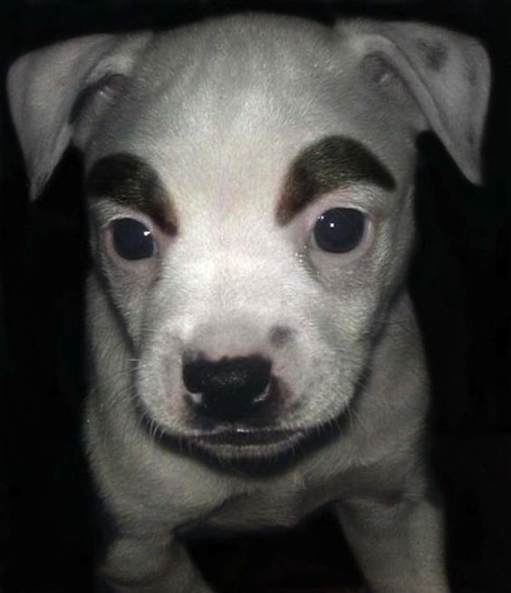 What Would Dogs Look Like With Eyebrows Animal Crossing Memes