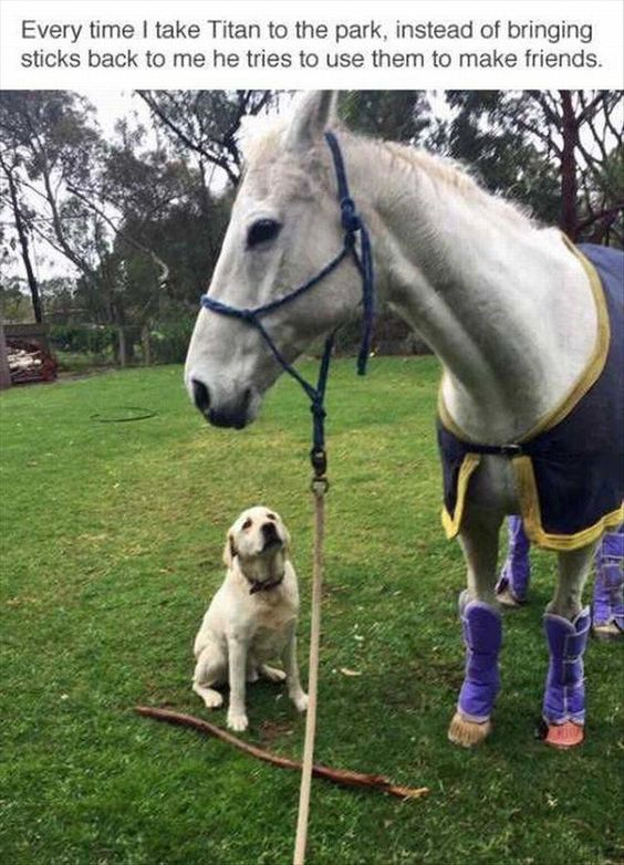 """Would you like the stick, big doggy?"""