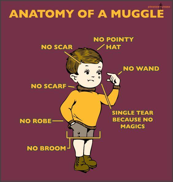 Anatomy-of-a-Muggle