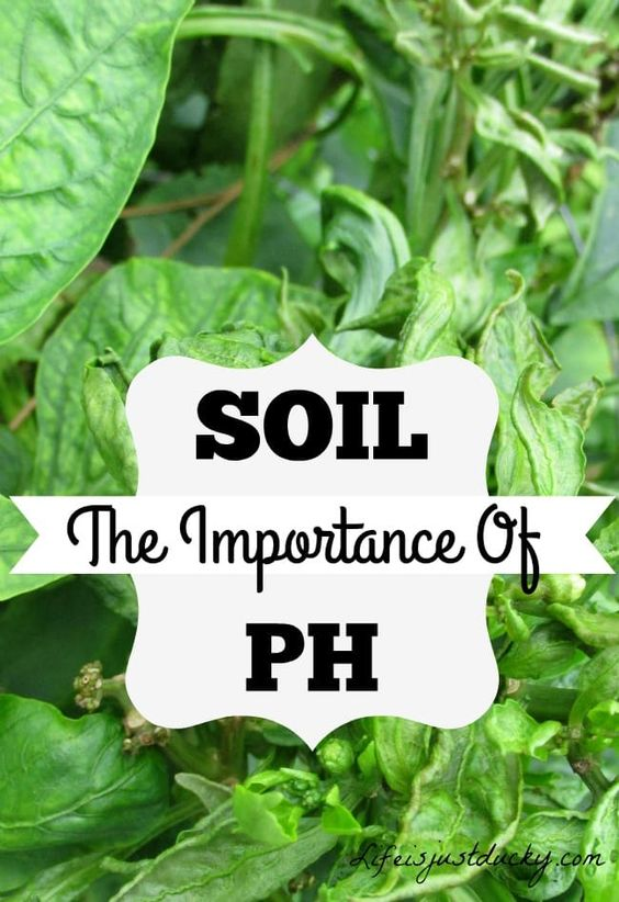 What Is Soil PH, And Why Does It Matter? - Life Is Just Ducky