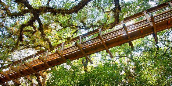 canopy-walkway @ Myakka River State Park- Florida #AmericaBound  @Earthbound Farm
