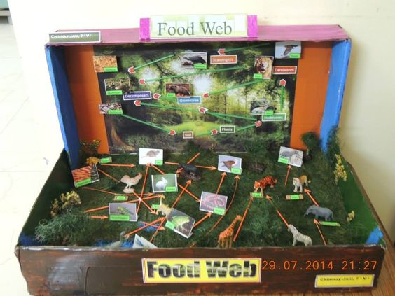 how to make a food web project