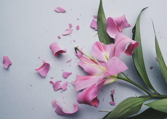 Fractured Flora  / Lily by Anna Thomas