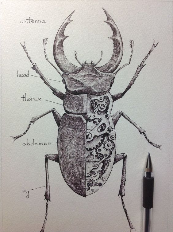 mechanical insect sketch google search fina tatuering
