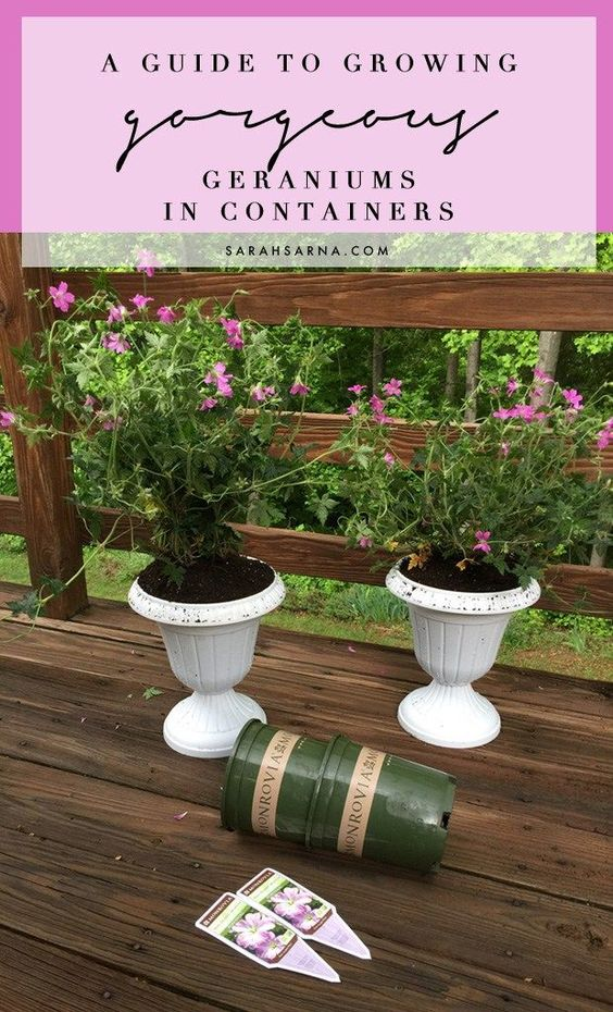 A guide to growing gorgeous geraniums in containerswith #MonroviaPlants #sp #GrowBeautifully, via @sarahsarna.