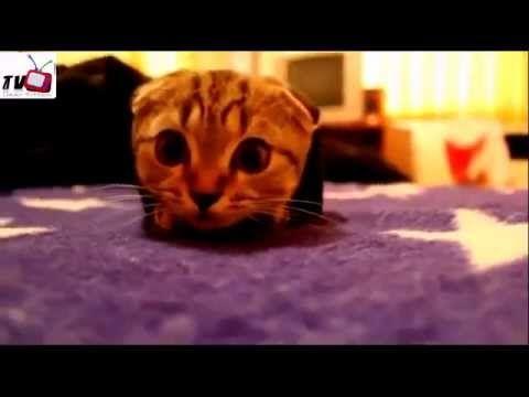 Dear Kitten - funny cats crazy kitten compilation - http://www.gigglefinger.com/dear-kitten-funny-cats-crazy-kitten-compilation/