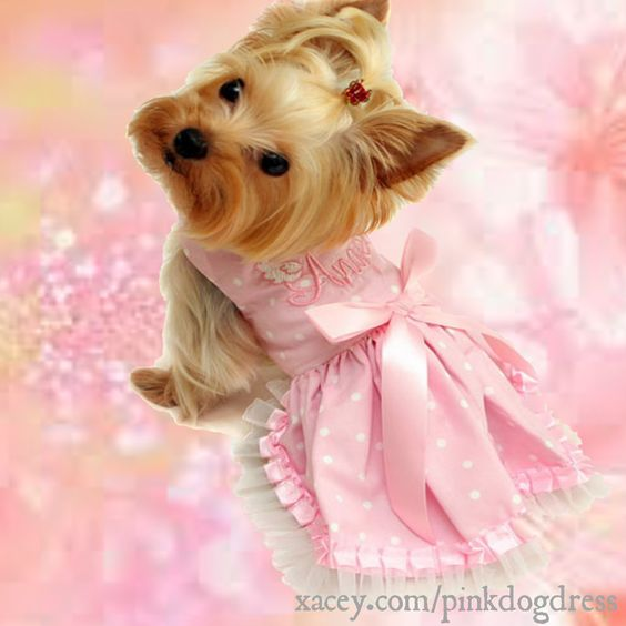 Little Yorkie In A Pretty Pink Dog Dress Pretty In Pink