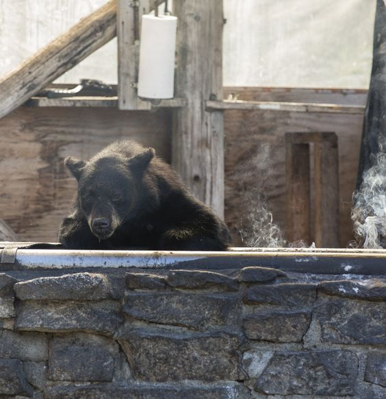 Unexpected dinner guests checking out the grill. #bear Not sure if you want to see this on your cruise tour?