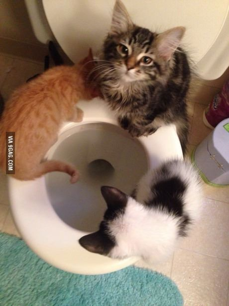 I think they want to be potty trained.