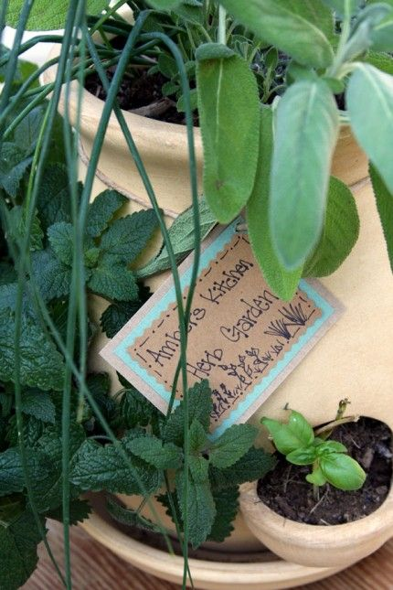 Tips for planting an herb garden