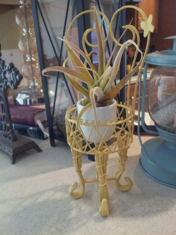 Air plant in espresso cup. Mini yellow metal chair.