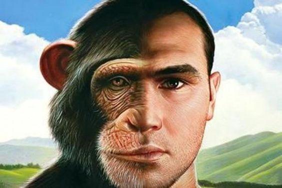 Πλησίστιος...: Είσαι εξυπνότερος από έναν χιμπατζή
